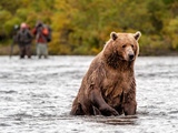 Brown Bear in river in Alaska Photographic Print by Kandace Heimerr
