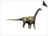Camarasaurus Dinosaur Prints