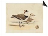 Meyer Shorebirds V Prints by H. l. Meyer