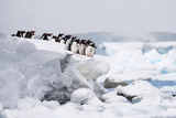 Gentoo Penguins in Antarctica Photographic Print by John Rollins