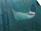 Spotted Eagle Ray Posters af Mike Aguilera