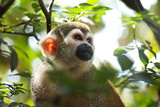 Primate monkey in Florida Zoo Photographic Print by Elise Valla