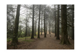 Forest Path Trees Dog Photographic Print by Henri Silberman