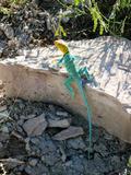 Reptile Lizard in Colorado Photographic Print by Greg Hughes