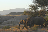 Elephants with mountains in Namibia Photographic Print by Donald Bruschera