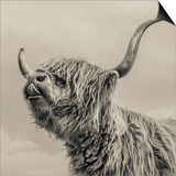 Highland Cattle Prints by Mark Gemmell