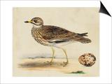 Meyer Shorebirds IV Prints by H. l. Meyer