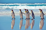 King Penguins by the water in Falkland Islands Photographic Print by Marguerita Melville