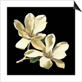Midnight Magnolias II Prints by Chabal Dussurgey