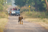 Wild cat Tiger on road in India Photographic Print by Haseeb Badar