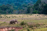 Elephant in Thailand Photographic Print by Steven Lewis