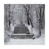Prospect Park Snowy Staircase Fotografisk tryk af Henri Silberman