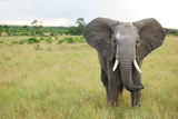 Elephant in Masai Mara Africa Photographic Print by Amy Levine