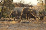 Elephant family in Africa Photographic Print by Mary Yaholkovsky