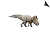 Protoceratops Dinosaur Posters