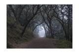 Oakland Leona Park Tree Canopy Photographic Print by Henri Silberman