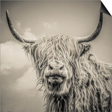Highland Cattle Poster by Mark Gemmell