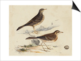 Meyer Shorebirds VI Print by H. l. Meyer