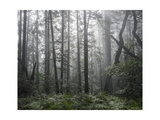 Oakland Redwood Peak Morning Fog Photographic Print by Henri Silberman