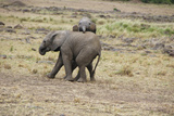 Elephant pair in Kenya Photographic Print by Frederick Small