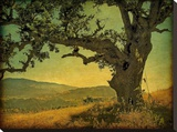 Blue Oak Hilltop Stretched Canvas Print by William Guion