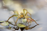 Arachnid spider in India Photographic Print by Satpal Singh