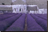 Lavender Abbey Stretched Canvas Print by Greg Gawlowski