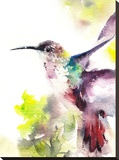 Hummingbird Stretched Canvas Print by  CanotStop