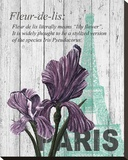 Paris Iris Stretched Canvas Print by Alicia Soave