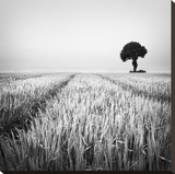 The Wheat Field Stretched Canvas Print by Margaret Morrissey