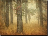 Oak Grove in Fog Stretched Canvas Print by William Guion