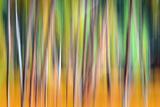 Herbstbäume Fotografie-Druck von Ursula Abresch
