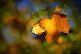 Fall Fantasy 1 Photographic Print by Ursula Abresch