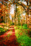 Take a Path in Autumn Photographic Print by Philippe Sainte-Laudy