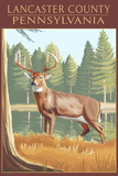 Lancaster County, Pennsylvania - White Tailed Deer Plastic Sign by  Lantern Press