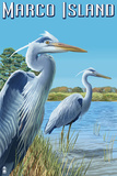 Marco Island - Blue Herons Plastic Sign by  Lantern Press