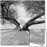 A Snow Scene in Richmond Park, Greater London Print by John Gay
