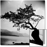 A Windswept Tree Silhouetted Against Bright Sunlight Prints by John Gay