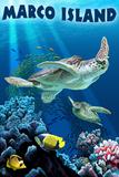 Marco Island - Sea Turtles Swimming Kunststof bord van  Lantern Press
