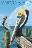 Marco Island - Pelicans Plastic Sign by  Lantern Press