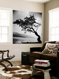 A Windswept Tree Silhouetted Against Bright Sunlight Wall Mural by John Gay