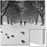 Regent's Park, London. Pigeons on a Snowy Path with People Walking Away Through an Avenue of Trees Poster by John Gay