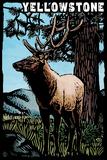 Yellowstone National Park - Elk - Scratchboard Plastic Sign by  Lantern Press