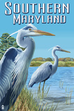 Southern Maryland - Blue Herons Plastic Sign by  Lantern Press