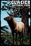 Glacier National Park - Elk - Scratchboard Plastic Sign by  Lantern Press