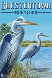 Chestertown, Maryland - Blue Herons in Marsh Plastic Sign by  Lantern Press