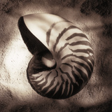 Nautilus Giclee Print by Laurel Wade
