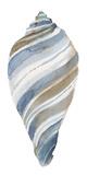 Coastal Seashells - Tulip Giclee Print by Sandra Jacobs