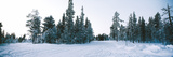 Winter Drifts Stampa giclée di Martin Smith