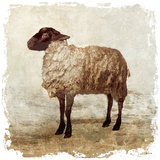 Rustic Sheep Posters by Edward Selkirk
